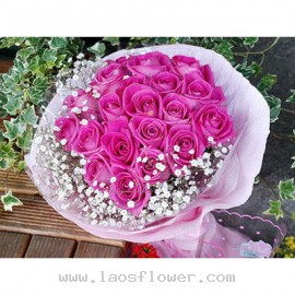 19 Sweet Pink Roses